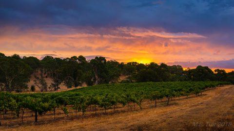 Barossa valley – wereldberoemd wijngebied